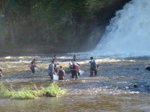 Pêche électrique en rivière