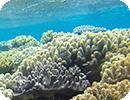 INTRO Blanchissement coraux