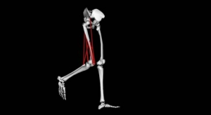 Biomechanics_Model_1