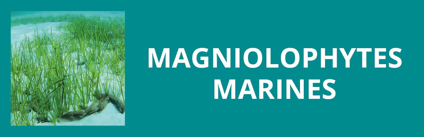Update magnolophyte