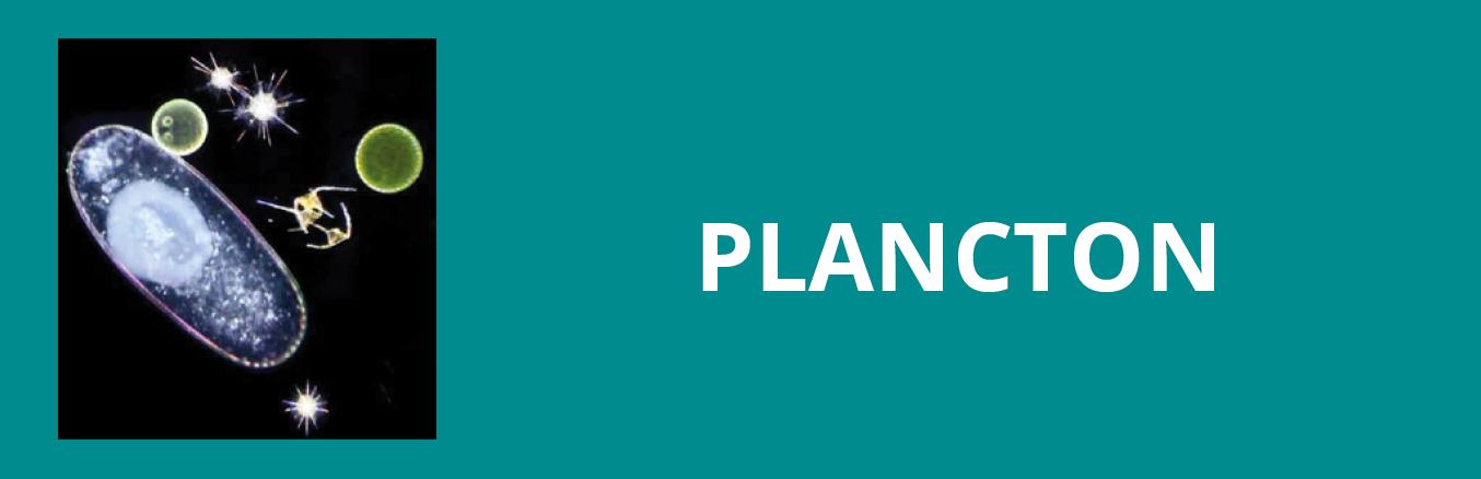Update plancton
