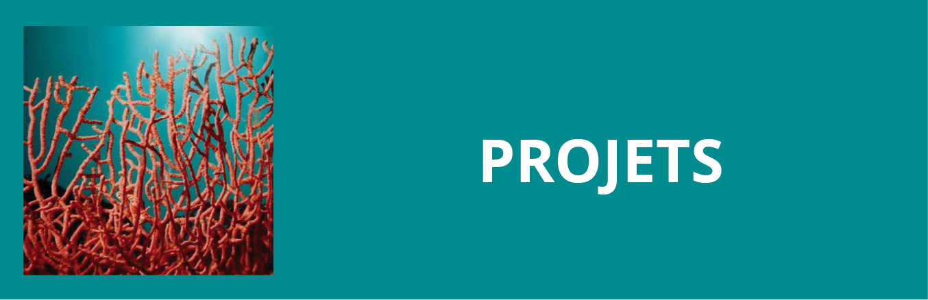 Update projets