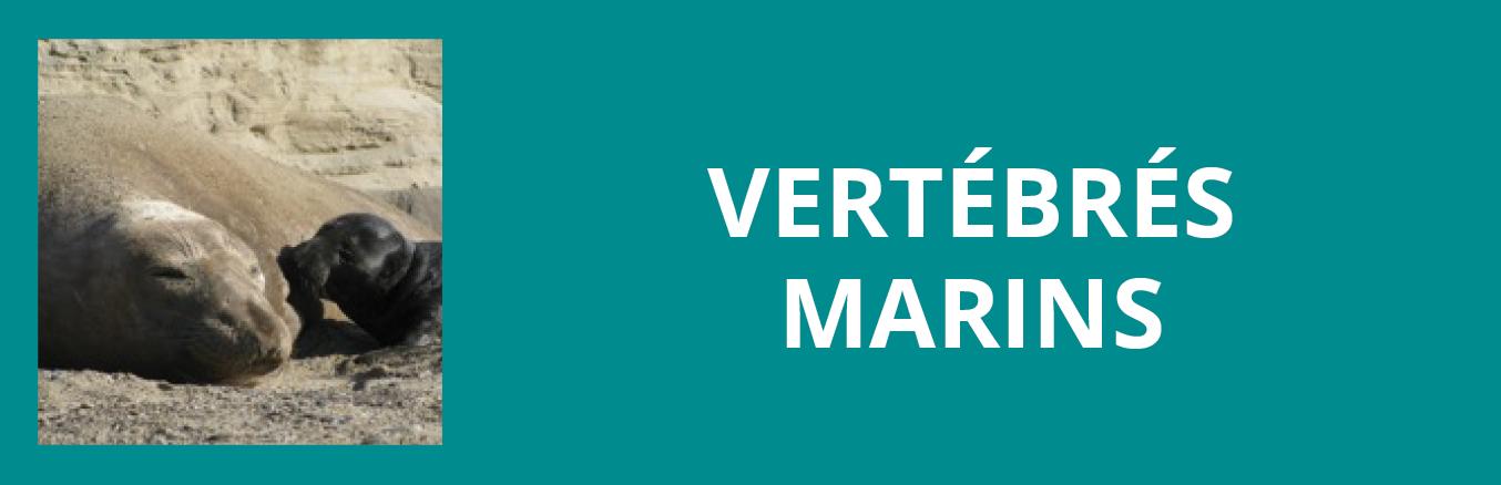 Update vertebres marins